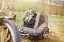 atrelado bicicleta bike trailer croozer dog go by bike